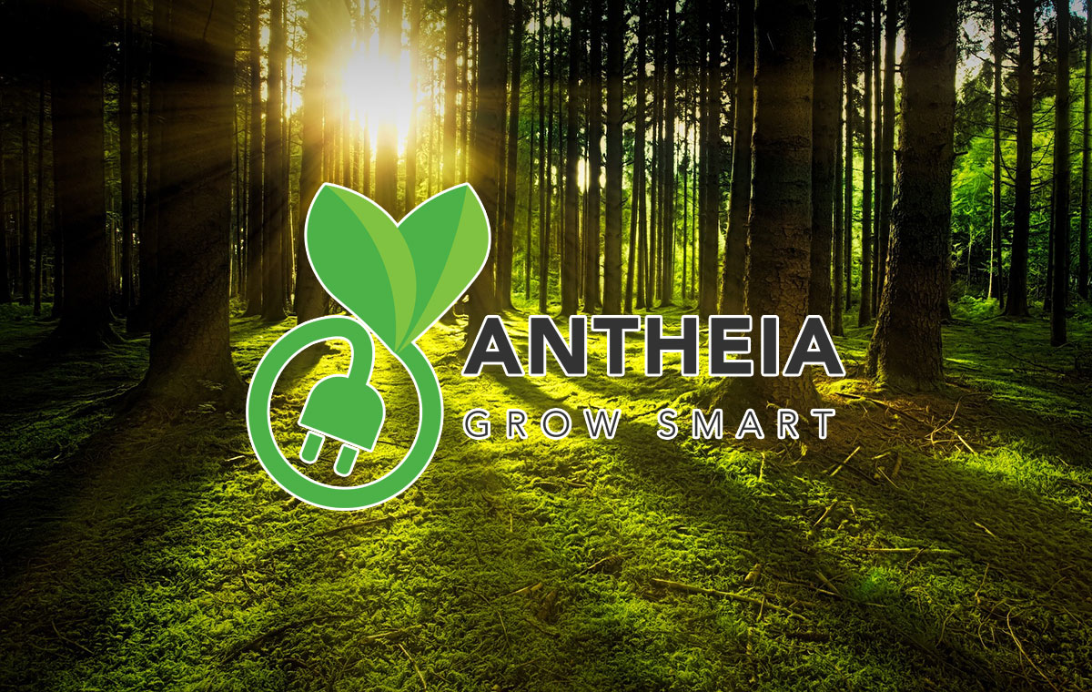 What is the future of Antheia?