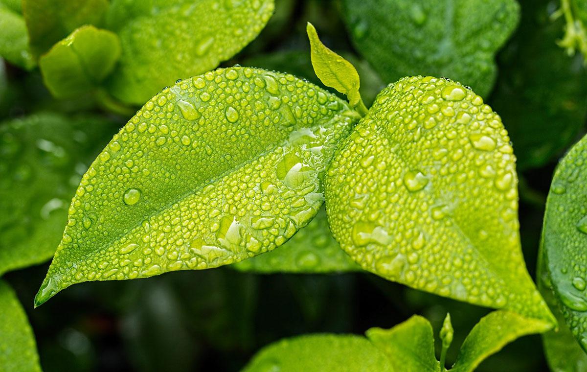Was ist VPD und wie kann es meinen Pflanzen helfen?